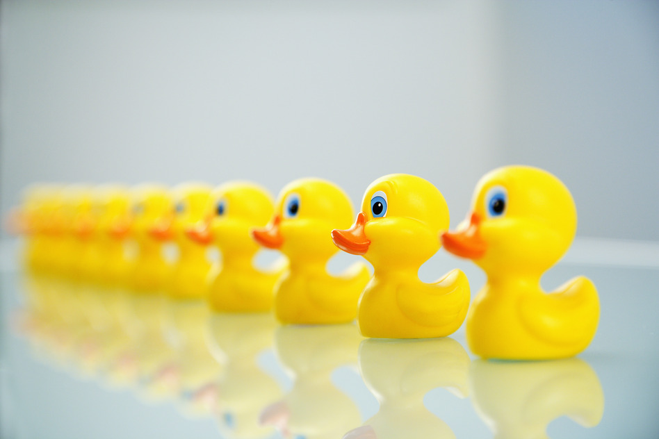 Yellow rubber ducks all lined up in a row.