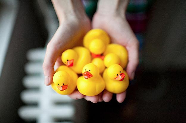 Rainy-Day-Duck-Pond-1