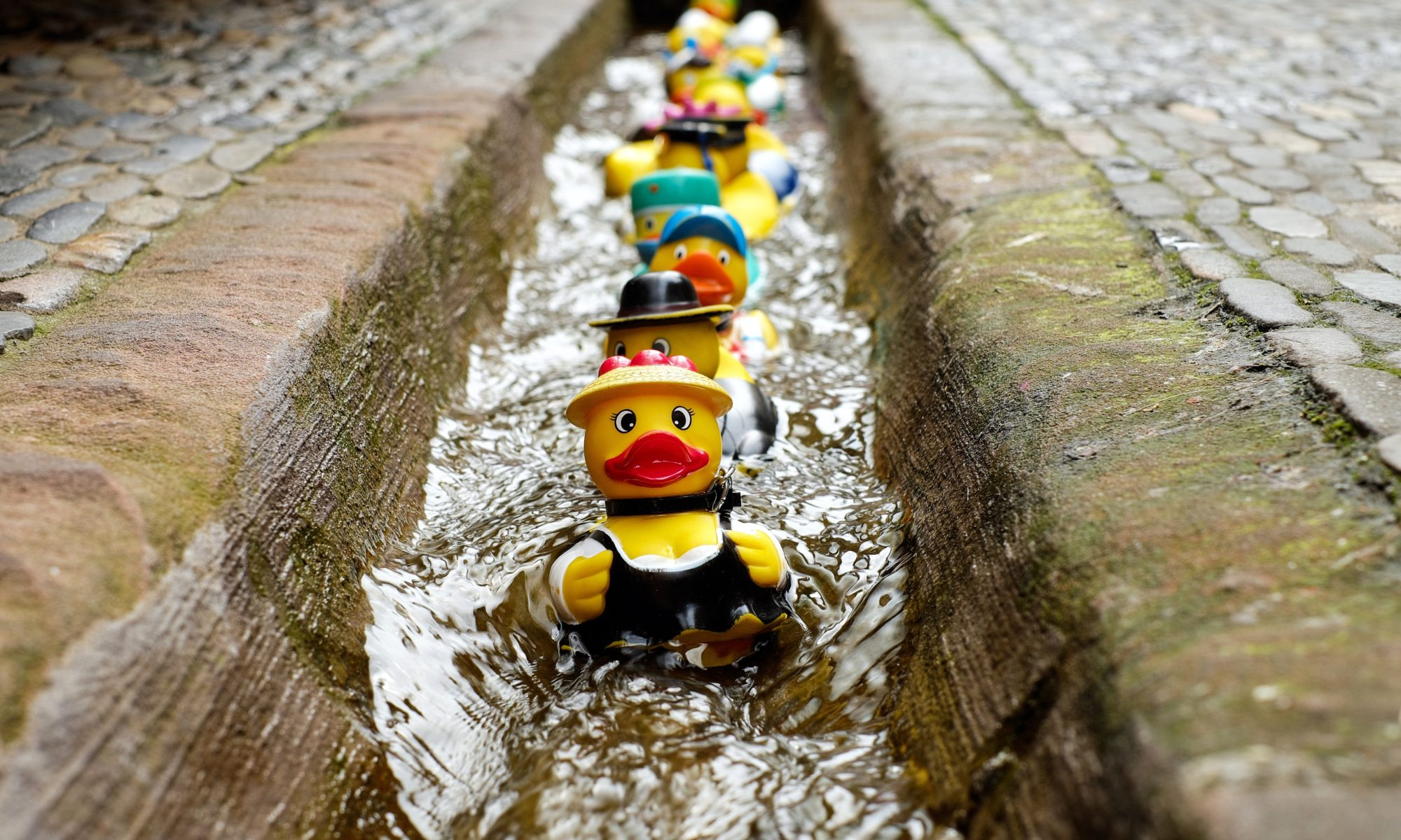 Rubber ducks floating down the water in the summer